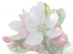 Blossoming Your Hearts Desires - www.jelila.com